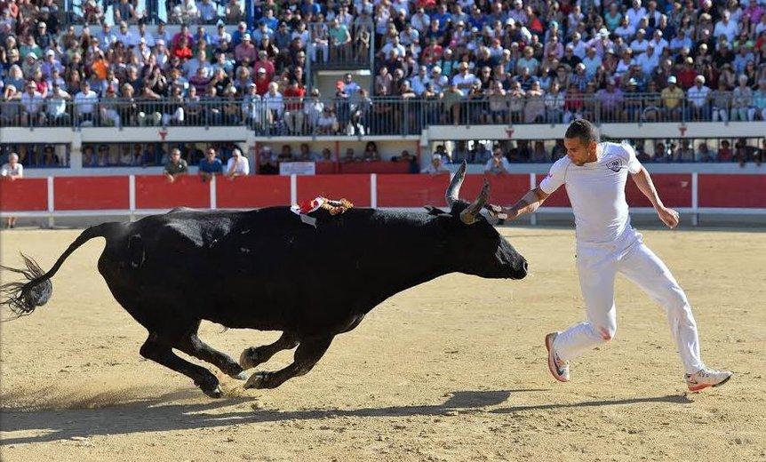 О корриде и быках