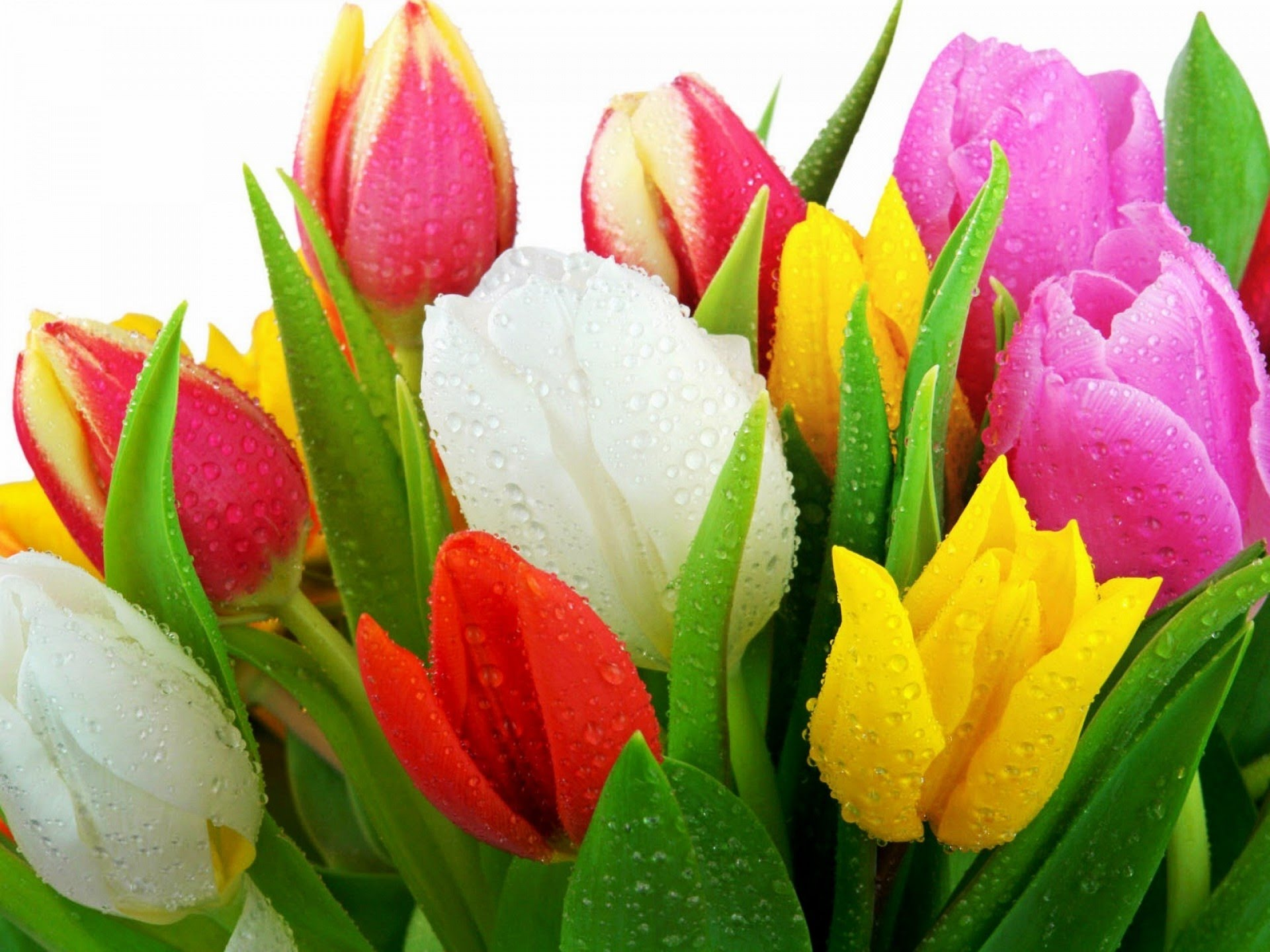С Праздником Весны, Милые Дамы!!!