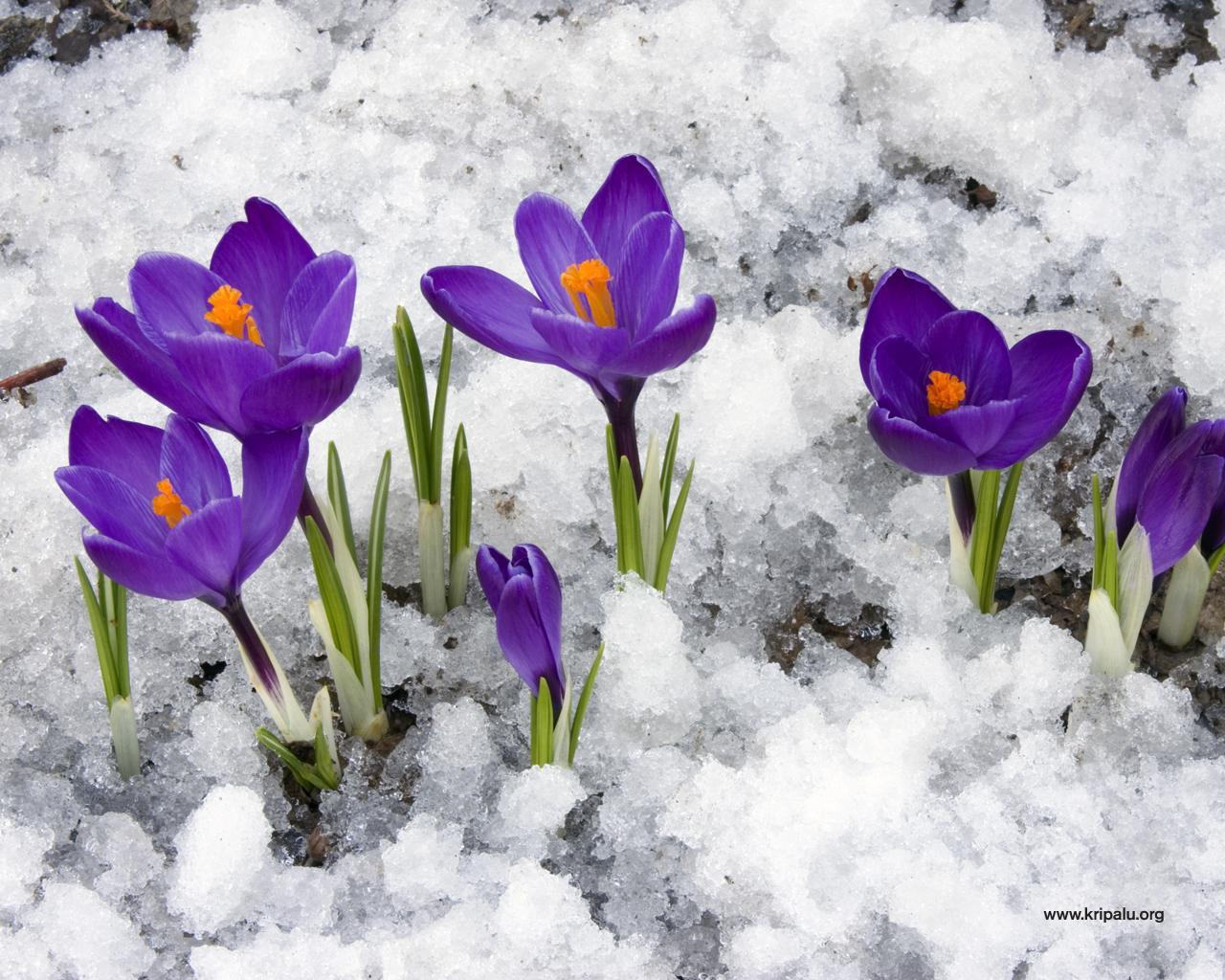 Весна по-КПшному