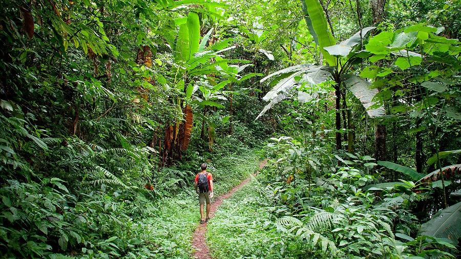 Дорога в Паксе Лаос. Почему не стоит бродить по джунглям Лаоса?
